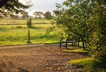 Goldener Herbst 09 | 2012 / Die Sonne taucht unsere Umgebung rund um die Agentur in ein warmes Gold. Wir sind fasziniert.