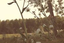 Carpe Diem / Le Mie Foto.
