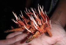 cordyceps fungus