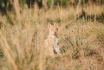 Cassiopea Infinity Love Wolfdog Land / Fotos de Cassiopea
