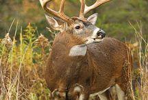 Animals----hunting