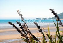 New Zealand Beaches / Showcasing New Zealand's Amazing Beaches... From a Land that is mainly Coast... Here are the diverse and beautiful beaches of Aotearoa...