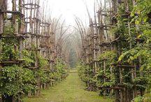 Architecture végétale nature
