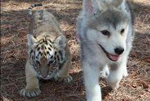 Cute animals / animals