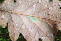 Efterår / ... Naturen omkring mig i efteråret !