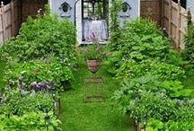 Garden - Kitchen Garden / by Terri-Ann Houghton
