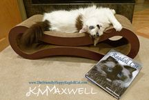 Cats with cat books / For photos of YOUR cat WITH your favorite cat book of your choice!  Cat Writers feel free to add your cat with your book too.   To join and pin comment on this board. Once you like the board and can join you can invite others.