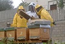 Blog Apicoltura / Articoli e attività di un apicoltore. http://www.apicolturaiezzi.it/blog-apicoltura/