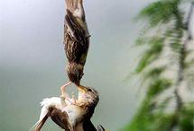 Pássaros raros