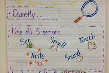 Scientist Inquiry skills