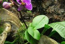 cómo cultivar orquideas