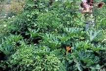 Gardening / I love to grow things!