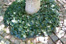 Trädgård LY