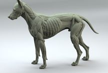 dog anatomy refernce