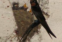 Ptaki -  Aves / Ptaki w Polsce