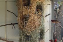 Finch aviary breeding