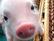Perfect Piglets / by Rachel Corell