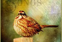 Birds & Nests / by Claire Stitsen