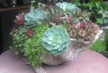PLCO succulents