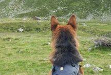 Hundsladen / Bei Hundsladen findest du Alles für deinen Hundesport und die Hundeausbildung bei diversen Behörden