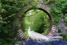 My witch's garden / by Aurora Hill