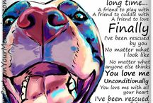 Pitties and Other Pups / Dog Art Inspiration / by Kara