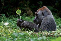 Cute Animal Photos / by Bonnie Tighe