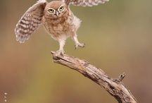 Dem owls