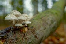Mushroom Gif