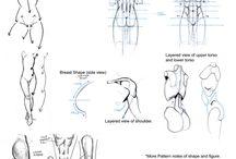 Female anatomies