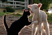 True Friendship & Authentic Love / If animals can show love to each other........ humans as a unique species, can easily do the same thing and say the most powerful words in this world.