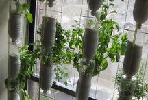 Syötävän hyvää parvekkeella / Ideoita parveke ja ruukkuviljelyyn