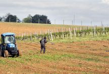 Pennsylvania Winery News