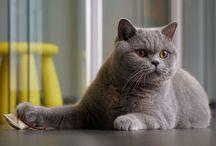 котейки / Кошки