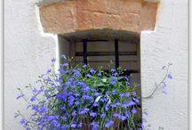 Fenêtres en fleurs