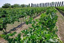 DeAngeli / Dal 1963 DeAngeli produce vini tipici dal sapore originale e si pone come obiettivo primario la qualità. Accurata e rigorosa vinificazione di uve scelte, tradizione familiare, innovazione e voglia di migliorarsi sempre sono gli ingredienti che fanno dei vini DeAngeli una piacevole sorpresa per il palato di chi ama il buon vino. Scopri DeAngeli su Excantia: http://www.excantia.com/produttori/cantine/deangeli