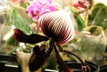 Orchid and Butterfly Shows / by Suzanne Hawkins