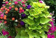 Nyári virág-kert ötletek