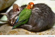 Too Cute ....