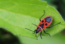 PEST * Schädlinge / mosquito  wasp deer  rabbit  mole&vole snail, slug tick  flea spider  ant  fly  stink bug Japanese beetle  aphid  grub