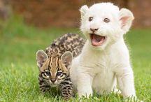 Wonderful World / Wonderful nature & wildlife photography