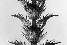 Botanical Photo Art