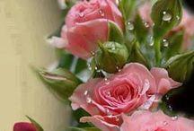 Kertek, virágok* Gardens, flowers