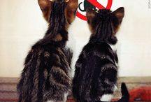Kitties / by Elizabeth Gutierrez