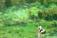 Gli animali e l' acqua