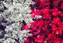 Plants, rośliny