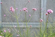 garden plants - sunny side