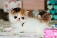 Kitten/cats