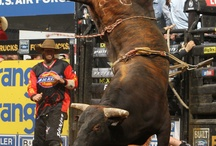 PBR Stuff..... / by Cindy Franks