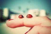 Ladybugs & flowers!